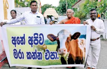 Prajaniti Dukung Penuh Pelarangan Penyembelihan Sapi dan Kerbau di Sri Lanka